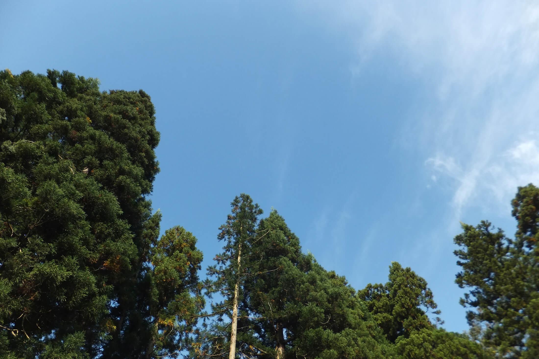先祖代々大切に育てた山の木で わが家を建てる