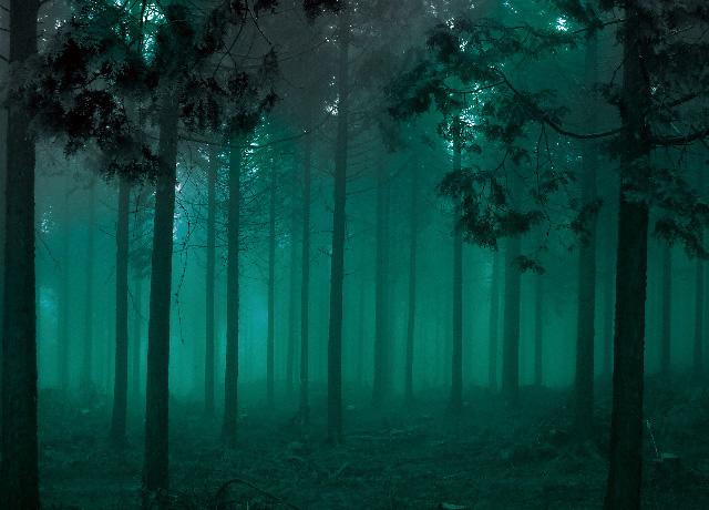 森を育てる