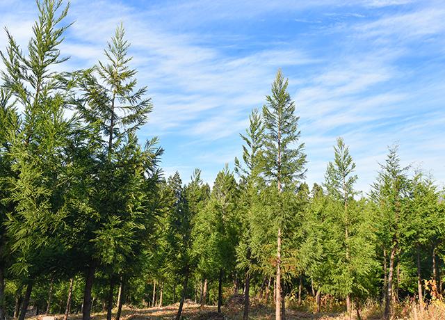 ❶森林育成・植林